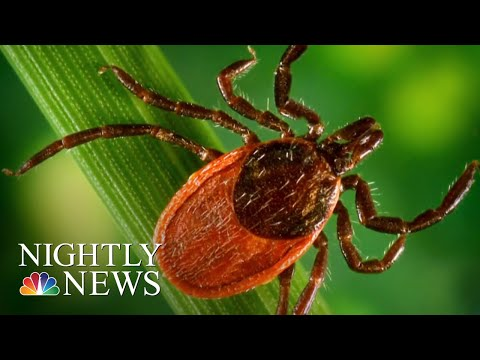 Lyme Disease-Carrying Ticks Spreading To New Areas, Scientists Warn   NBC Nightly News
