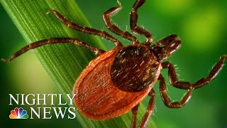 Lyme Disease-Carrying Ticks Spreading To New Areas, Scientists Warn | NBC Nightly News