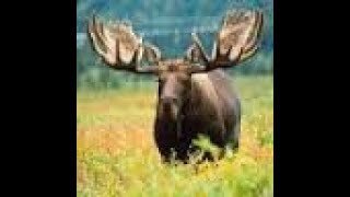 1/25/19 MooseScrapper Live Stream