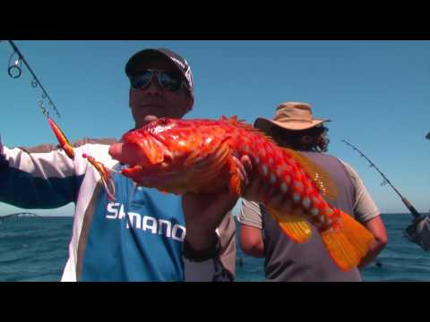 Perth Fishing TV Episode 3 - Jigging vs Baits