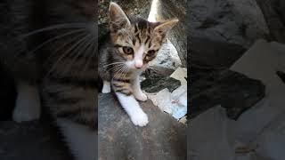 子猫「なんだこりゃ?」