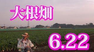 ☆大根畑☆ thumbnail