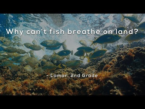 Why Can't Fish Breathe On Land?