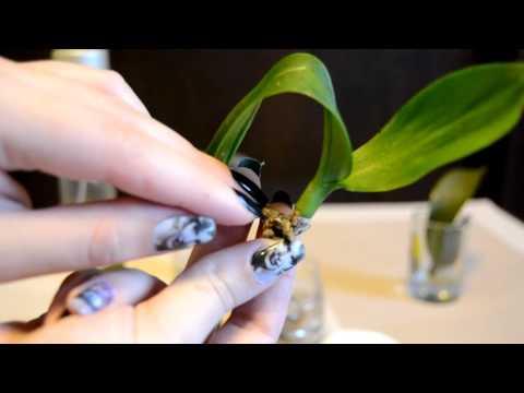 Основные моменты при уходе за орхидеей: уход после цветения