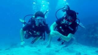 "PADI 5 Star IDC Dive Center ""Scuba Birds"" Diving in Koh Samu island"