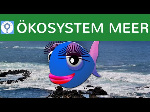 Ökosystem Meer -