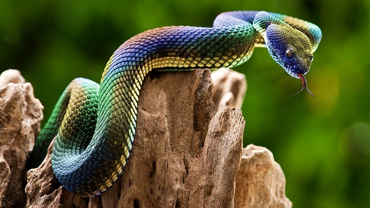 most-unbelievable-iridescent-animals-in-the-world
