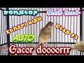 Kenari Gacor Full Hd  Mp3 - Mp4 Download