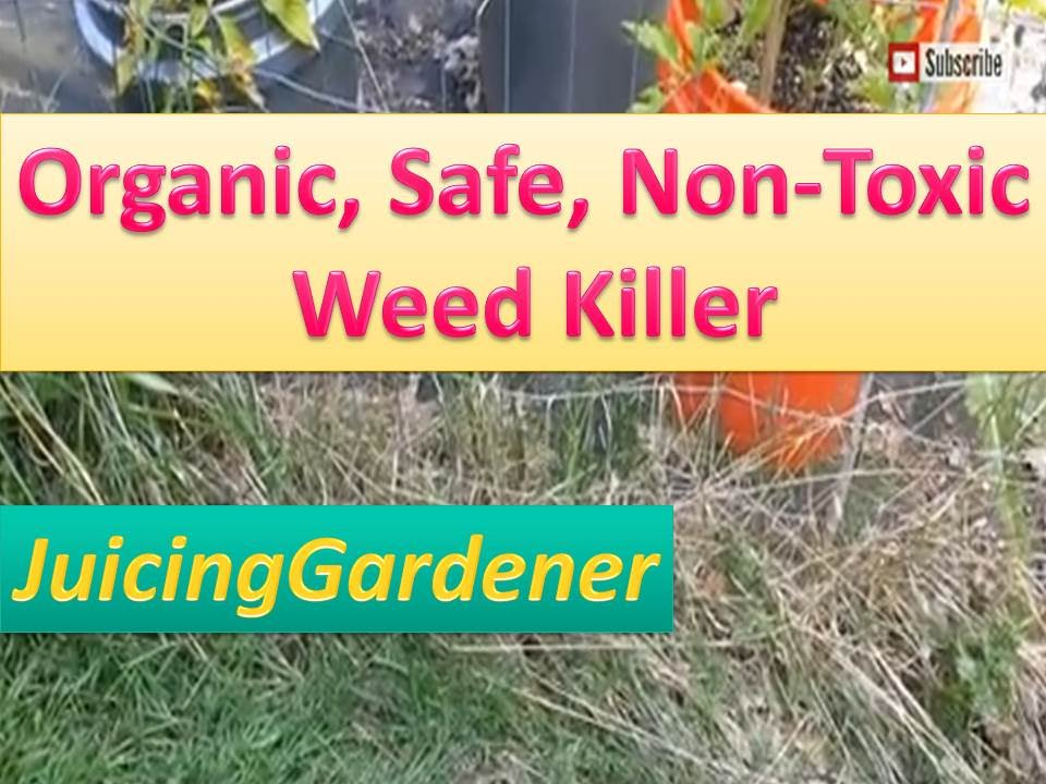 Organic Natural Safe Weed Killer Pesticide Free Non Toxic Can Vinegar Kill Weeds Grass