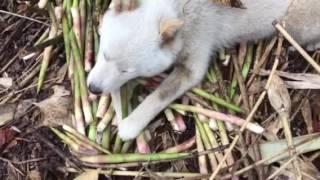 採ったタケノコは、私の物と竹の子の上に鎮座.
