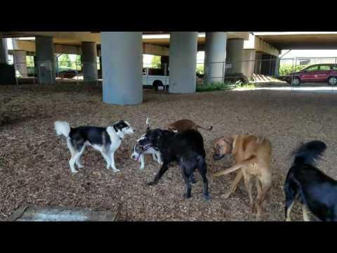 Oakland Dog Walker general fun and mischief