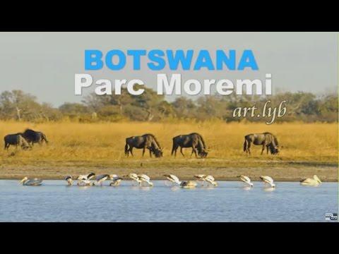 BOTSWANA Moremi Afrique art.lyb