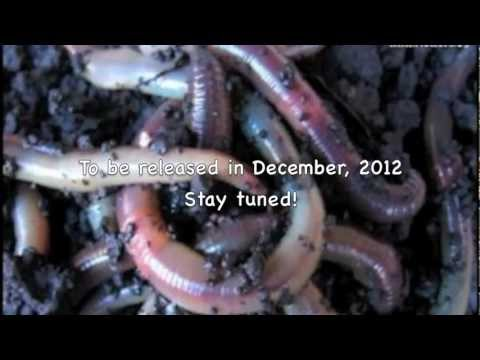 """Worm Poop Song"" by Birdsong and the Eco-Wonders- Sound Clip"