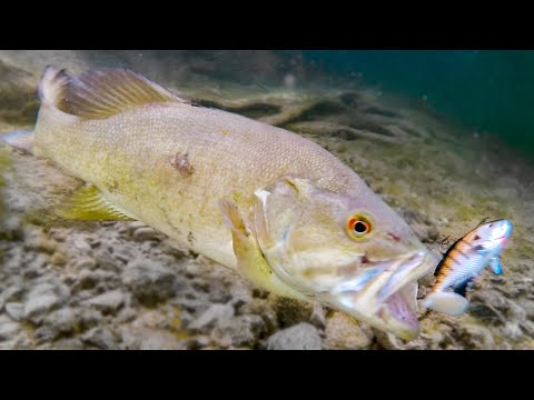 How Fish React To Different Lures **Underwater Bite Footage**