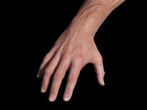 3D Hand Study | Andor Kollar - Character Artist