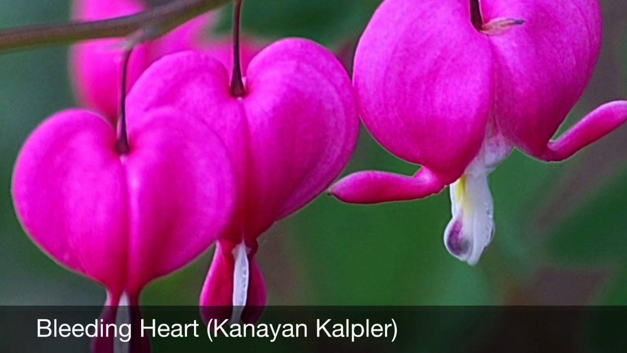 Dünyanın en güzel çiçek resmi