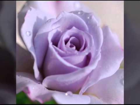 Фото самый красивый букет роз в мире