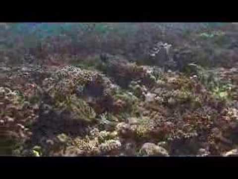 Jeff (米傑富) Voiceover 配音 Demo: Pratas Island 1 東沙群島