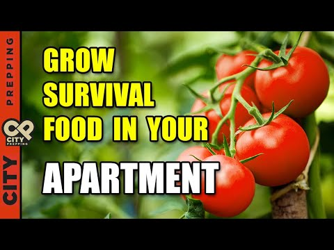 25 Survival Vegetables To Grow In Your Apartment (pt1)
