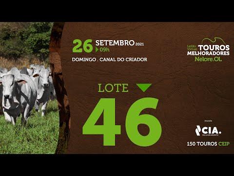 LOTE 46 - LEILÃO VIRTUAL DE TOUROS 2021 NELORE OL - CEIP