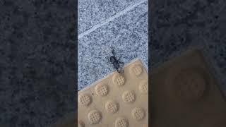 사슴벌레 구하기