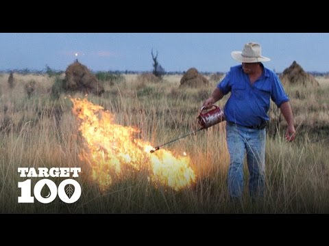 Regenerating the Land | Cattle in The Kimberleys