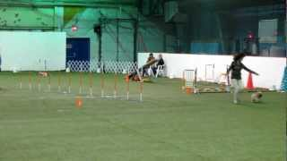 "Agility Yorkshire ""pudding"""