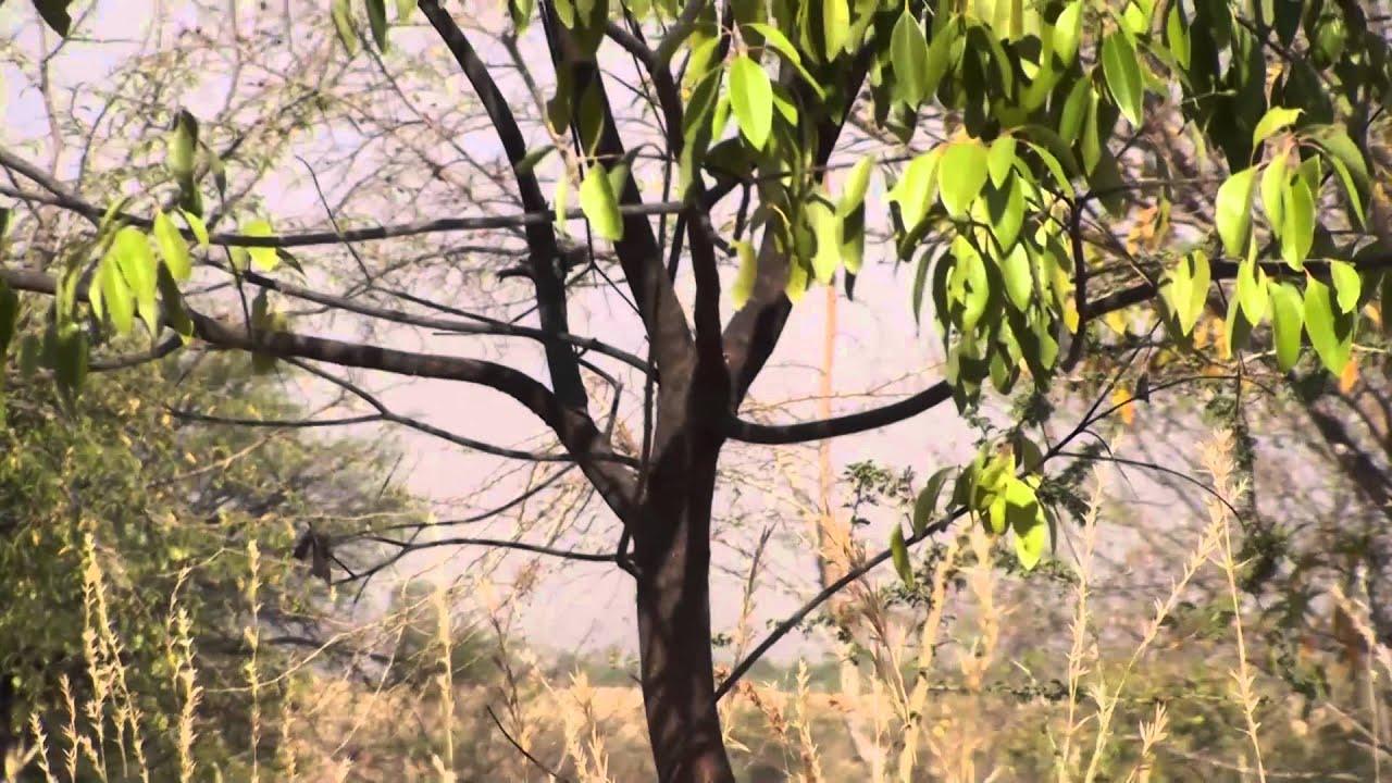 Medicinal Plant India