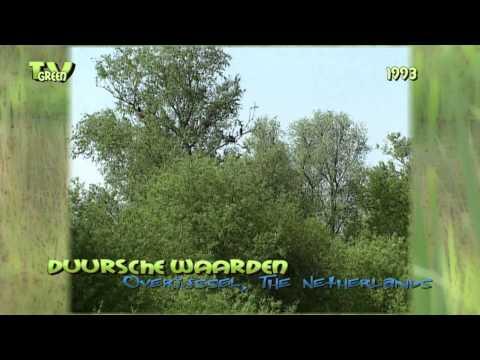 River IJssel - Duursche Waarden 1993  #02