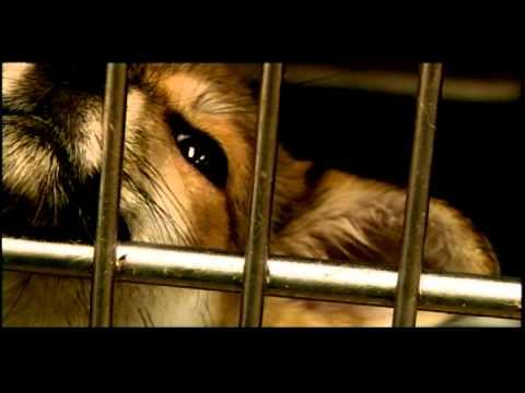 名もなきペットたち:「殺処分」ガス室の犬