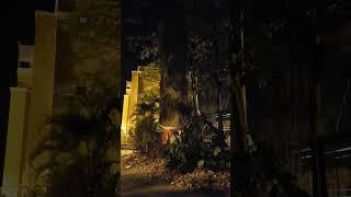 태국 영화 랑종에 나올 법한 나무 | A tree th…