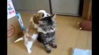Собаки и кошки друзья Dogs and cats are friends