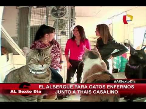 El Albergue Para Gatos Enfermos: La Visita De Thais Casalino