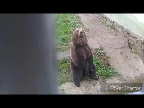 Наш Ярославский зоопарк.