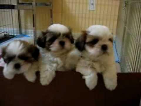 süße hunde welpen