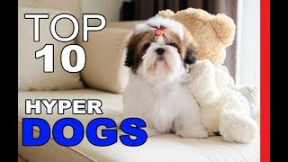 Top 10 Least Hyper Dog Breeds