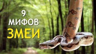 ЗМЕИ 🐍 9 Мифов О Змеях! ИНТЕРЕСНОСТИ