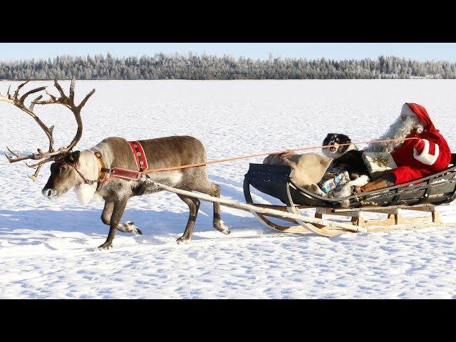 Weihnachtsmann & Rentieren\: beste Rentierschlittenfahrten des Weihnachtsmannes Lappland Finnland