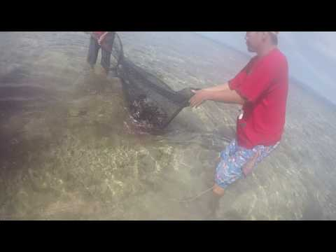 Bohol 2017 05-04@0850 Loon Basdacu Deep Sea How To Clean Sea Urchin