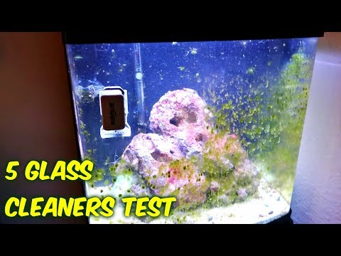 5 Aquarium Glass Cleaners Test