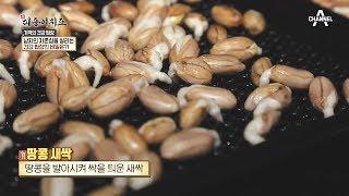'땅콩새싹'으로 남자의 자존감과 일상생활의 활력을 되찾다! |신대동여지도 261회 thumbnail