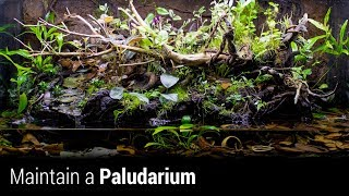 How to Maintain an Awesome Paludarium