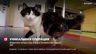 Коту по имени Пух вживили протезы задних конечностей