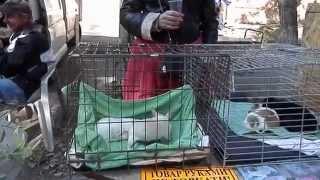 Одесса. Староконный рынок.Продажа собак. Осень 2014.