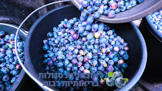 Growing BlueBerries in Israel