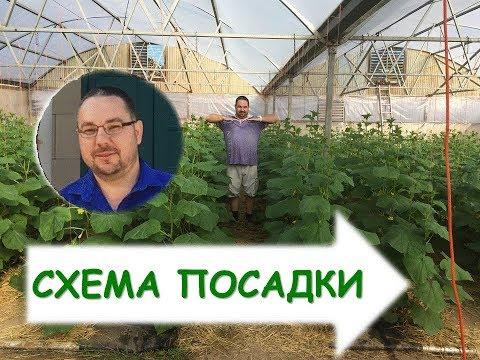 Как вырастить огурцы в теплице? (часть вторая) Выращивание огурцов в теплицах в осенний период.