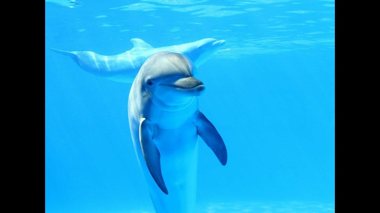 Картинки по запросу разумные дельфины