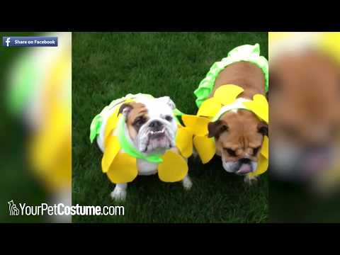 Funniest Pets in Costumes Compilation - October 2018