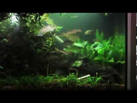 """Fluval Aqualife & Plant LED 24""""-34"""" Lighting Review"""
