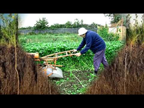 Готовим огород к посадке весной. Сеем сидераты! Готовим землю